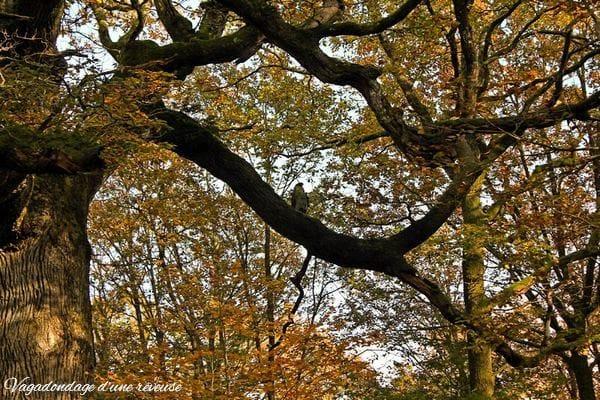 Le chêne des Hindrés à Broceliande