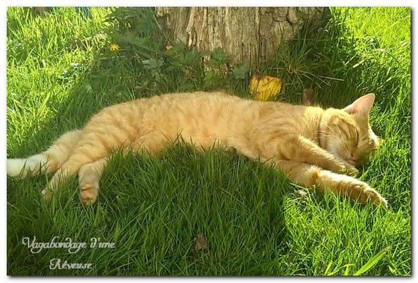 chat qui dort ASMR